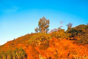 Acacia Ridge - Copyright Otto OMallee